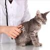 Ветеринарные клиники в Молчаново